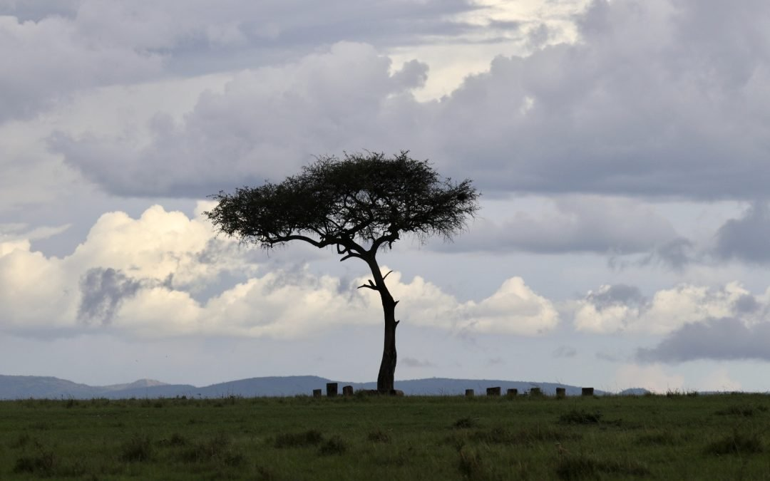 tree in Maasai Mara Reserve in Kenya