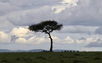 Touching Down in Kenya