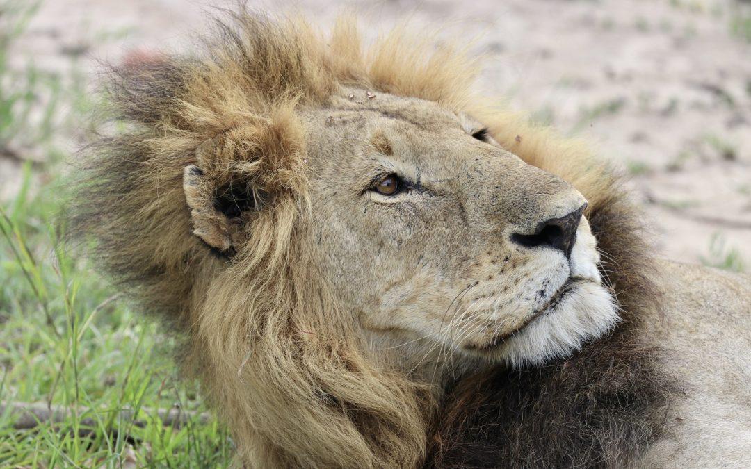 Last Day on Kenyan Safari